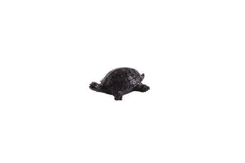 Черная черепаха