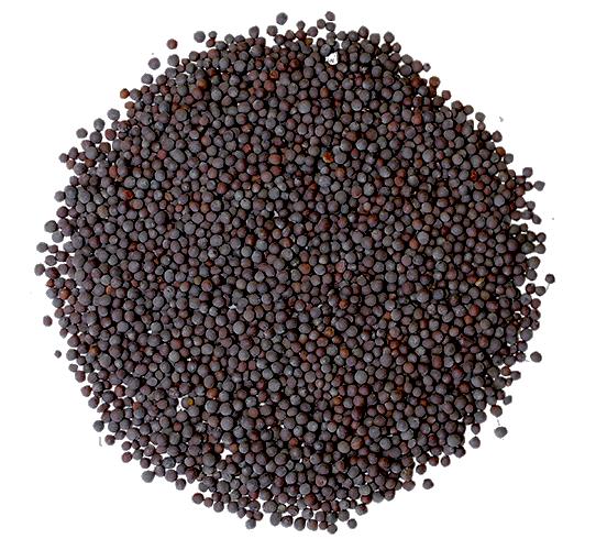 Горчица черная 100г